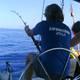 delphine suppernschildkröten sardininen segeln
